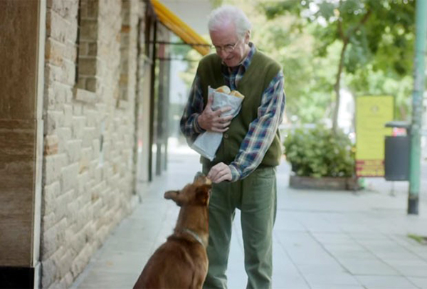 cachorro-doacao-orgaos