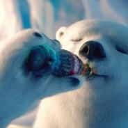 Urso polar no Rio de Janeiro, pode?